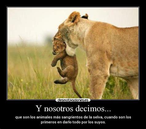 imagenes de leones tristes im 225 genes y carteles de leona pag 9 desmotivaciones