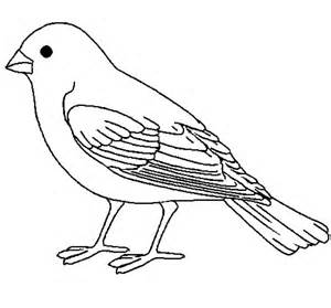 coloring book birds bird coloring pages dr