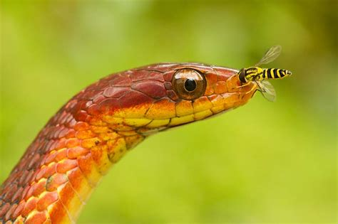 colorful snake colorful snakes a must see collection of colorful snakes