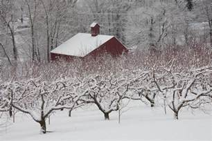 Photo Murals For Walls glastonbury ct apple orchard in winter jack mcconnell