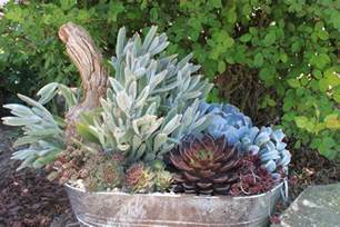 garden containers in madison georgia succulents