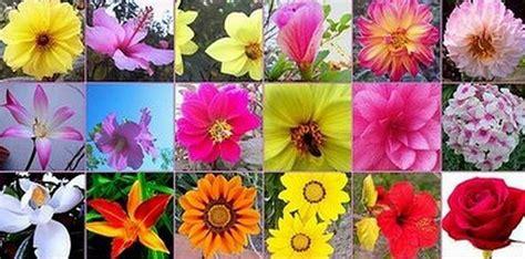 imagenes flores bach como usar las flores de bach para adelgazar la gu 237 a de