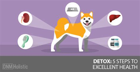 Http Www Dogsnaturallymagazine How To Detox Your 5 tips for detoxing your from s daily toxins
