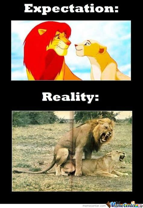 Lion Sex Meme - lion king expectation reality before and after marriage