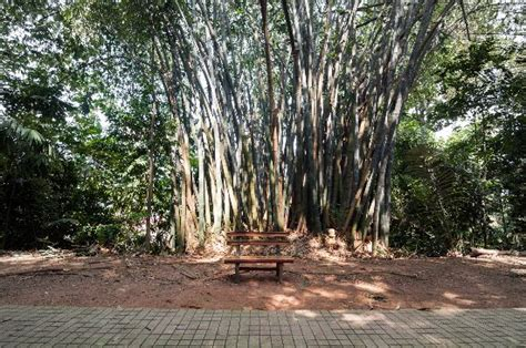 eco forest kuala lumpur malaysia picture of kl forest
