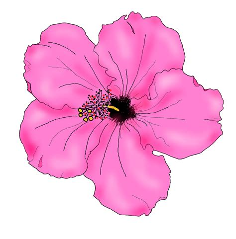 free clipart downloads hibiscus clip images free download
