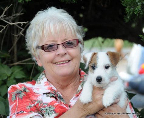shorty puppies for sale akc shortie puppies for sale health temperament guarantee