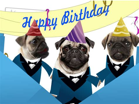 singing pug pin pug for the of pugs photo 33608223 fanpop on