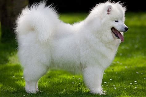 top ten cutest dogs the gallery for gt most beautiful breed in the world