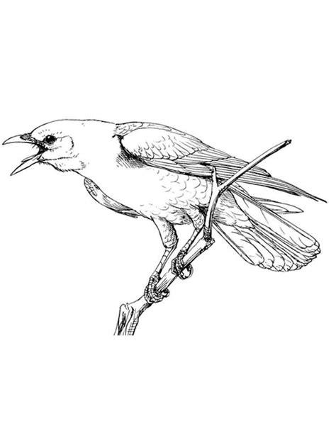 Crows Birds Coloring Pages 4 Of Cuckoo Bird
