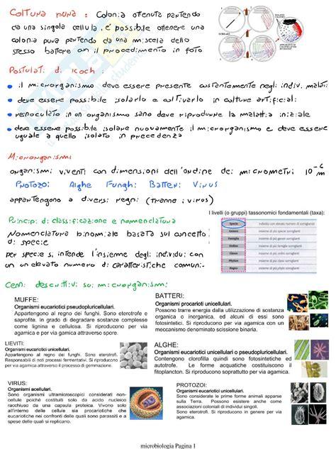 microbiologia alimenti concetti appunti di microbiologia degli alimenti