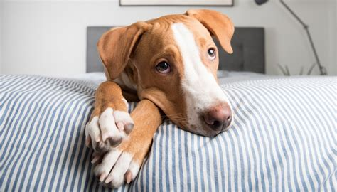 quietest breeds 25 most dogs by breed size small medium and large