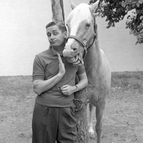 Mister Ed Het Sprekende Paard by Mr Ed The Talking 24 Fascinating Facts That You