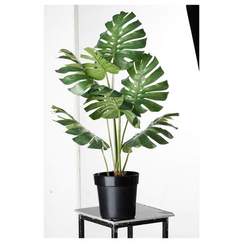 monstera ikea monstera potted plant city potted