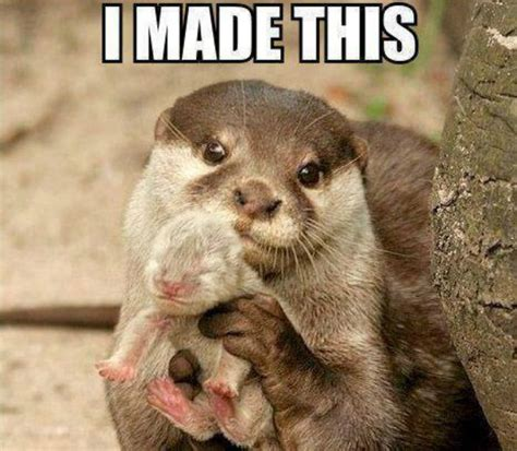Otter Meme - ratisart on being a graphical artist in the making