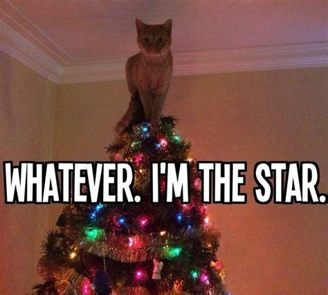 Christmas Animal Meme - christmas tree star cat meme things that make me