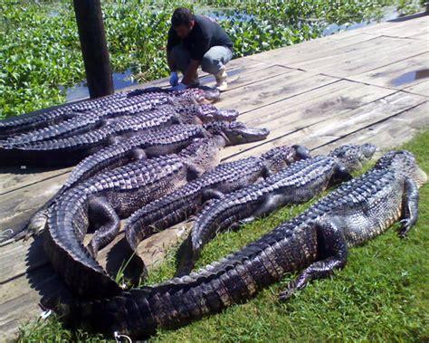 gator boats llc se la alligator hunts llc home
