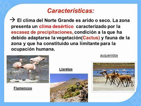 fauna de la zona sur chile en imagenes fauna de la zona norte grande de chile intense orgasm
