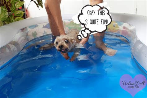 swim with me puppy swimming pool for dogs singapore