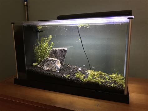 fluval spec aquascape fluval spec aquascape 28 images planted 2g fluval spec