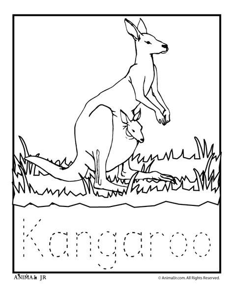 kangaroo coloring page k3 science pinterest