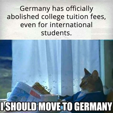 Newspaper Cat Meme - i should move to germany justpost virtually entertaining