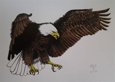 eagles colors bald eagle colored drawing