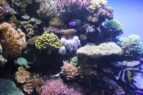 coral reef by jengineerr on deviantart aquarium coral reef by blicrowave bloven on deviantart