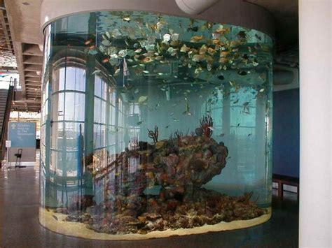cool small fish tanks roselawnlutheran