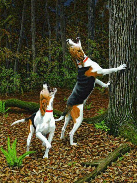 how to a coon to tree a raccoon walker style dogs and treeing walker coonhound