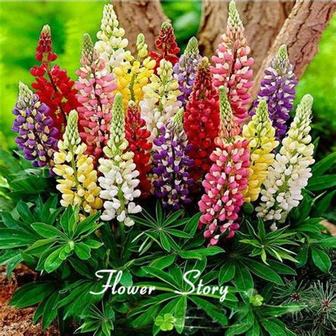 Aliexpress Com Buy Free Shipping Colorful Rainbow Tutti Buy Garden Flowers