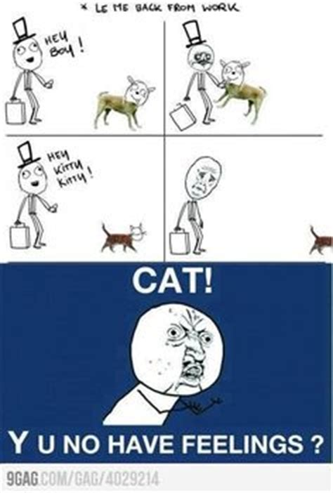 why cats are better than dogs dogs are better than cats on cat dogs and pictures