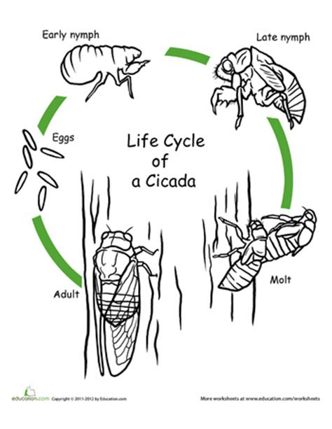 butterfly life cycle coloring sheet homeschool color the life cycle cicada worksheets cycling and