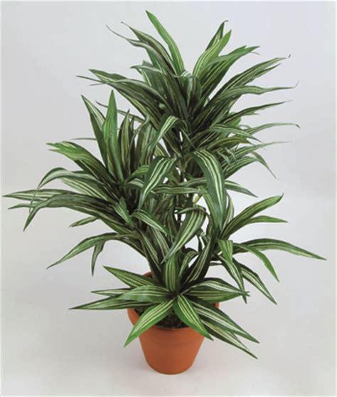 piante appartamento resistenti piante antismog fai da te in giardino