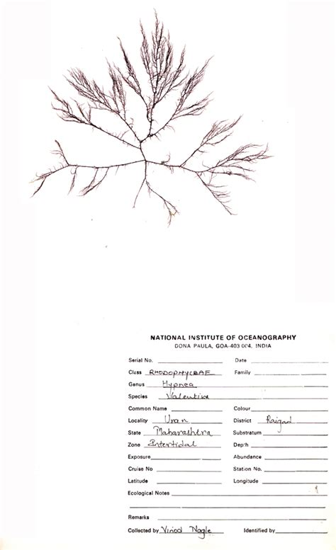 how to sheets herbarium sheet www pixshark images galleries with a bite