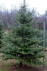 cut your own christmas tree farms near philadelphia pa