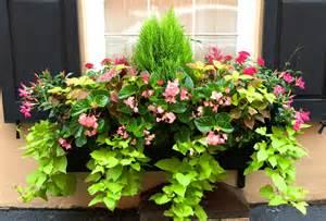 jll design window box ideas more garden inspirations