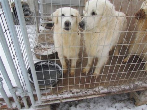 puppy mills near me help me central ky is 1