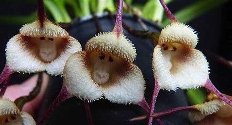 Imagenes De Flores Asombrosas | asombrosas flores con formas de animales agriculturers