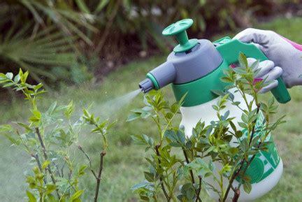 Garden Pesticides by Chemicals Using Them In Gardens Rhs Gardening