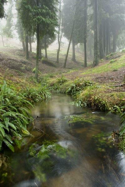 monte aloia nature park espanha monte aloia nature park spain newhairstylesformen2014 com