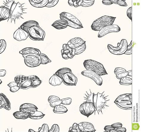how to make doodle nuts nuts set draw sketch background pattern vector stock