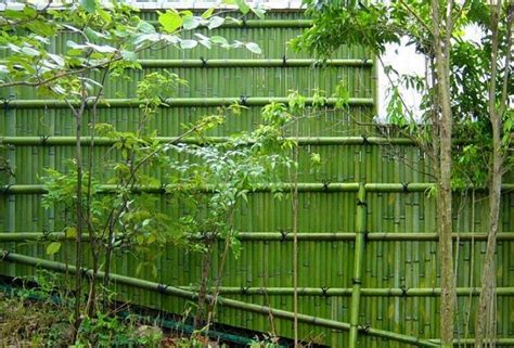 Inspirations Home Decor Raleigh bamboo privacy fence the best inspiration for interiors