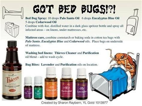 homemade bed bug repellent bed bugs diy sprays bugs repellant home sprays first