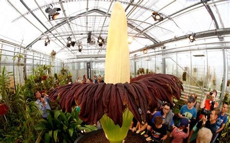 largest botanical garden in world world s largest flower blooms in tokyo for time in 5