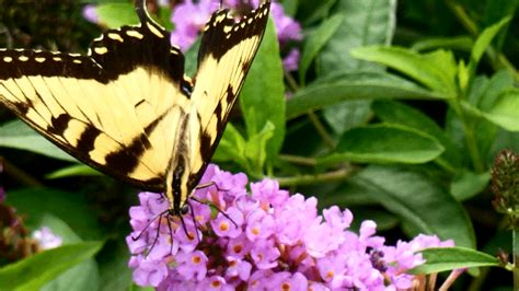 flowers for butterfly garden butterfly garden plants