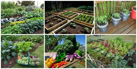 best summer garden vegetables 10 summer vegetable gardens for summer fresh salad top