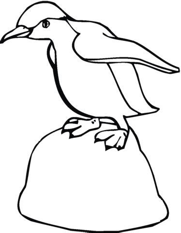 macaroni penguin coloring page macaroni penguin coloring page coloring pages
