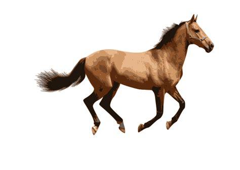 imagenes en png de animales clipart caballo 2