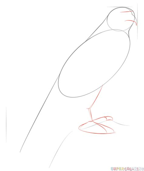 how to draw a peregrine falcon step by step drawing